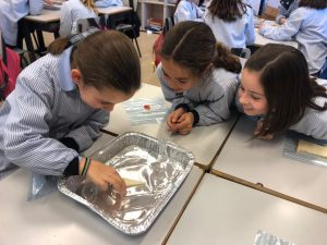 Do you know how fungi work? Colegio Concertado Barcelona
